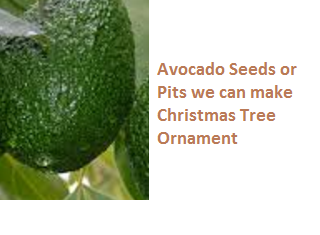 Avocado Seeds or Pits we can make Christmas Tree Ornament