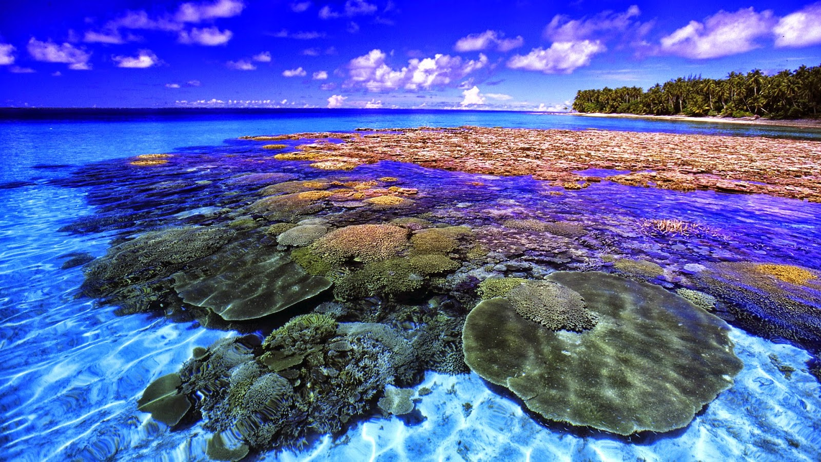 Coral Reef - HD Wallpapers   Earth Blog