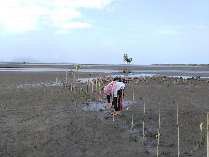 Rehabilitasi Mangrove dan Pola Zonasinya