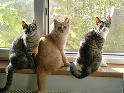 Three cats sitting in a row