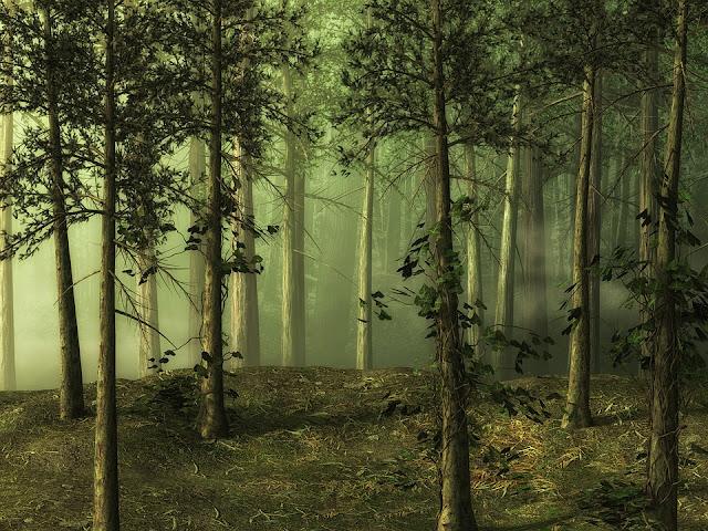 Makalah Manfaat Hutan dan Pengolahan Hutan
