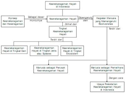 Diagram Keanekaragaman Di Indonesia
