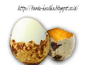 Manfaat dari Telur Puyuh