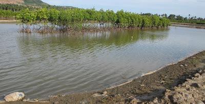 cara budidaya ikan,budidaya udang vaname tradisional plus,dengan plastik mulsa,supra intensif,air tawar,artikel,semi intensif,di kolam terpal,pdf,