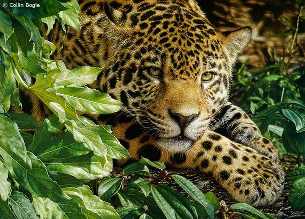 Paisajes De Animales: Imágenes Arte Pinturas: Paisajes Salvajes De Animales