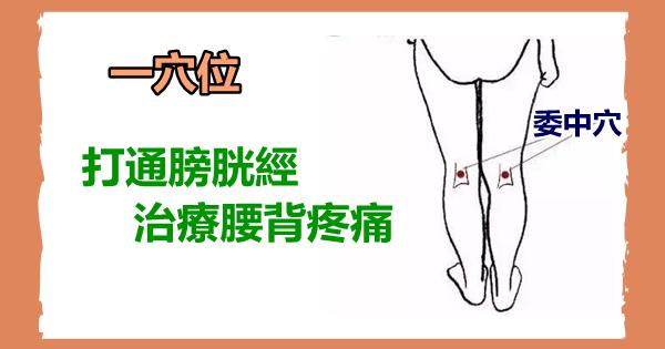 委中穴:打通膀胱經,治療腰背疼痛!
