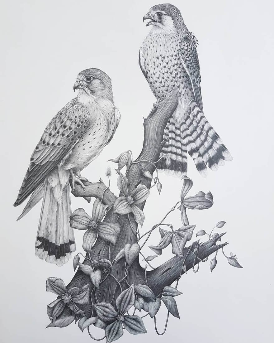 13-Birds-of-prey-Kerry-Jane-Detailed-Black-and-White-Wildlife-Drawings-www-designstack-co