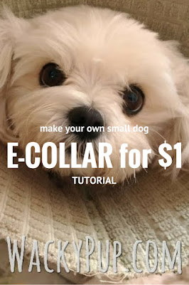 How to make a soft e-collar for a small dog for $1 - Genius!