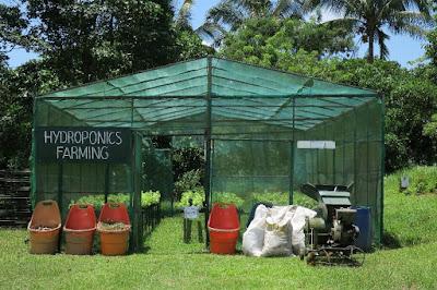 hydroponics farming manila