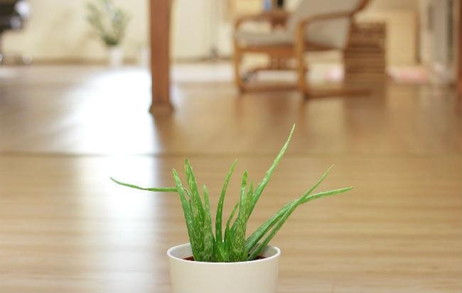 Le piante utili contro l'inquinamento indoor