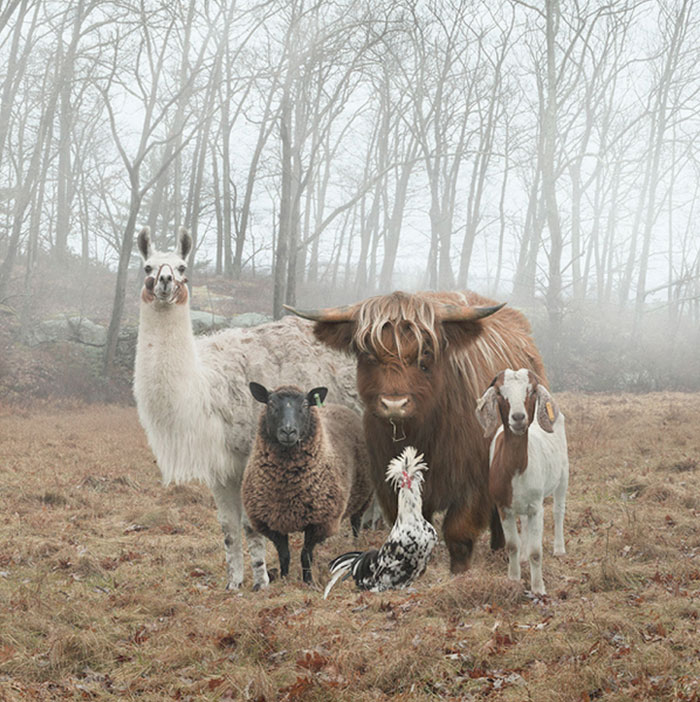 32 Animals That Look Like They're About To Drop The Hottest Albums Of The Year - The Up-And-Coming Music Legends