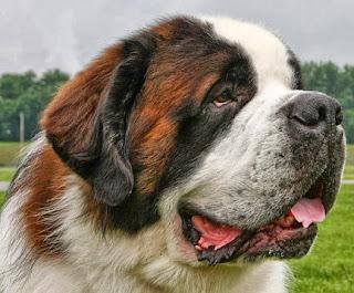 Prednisone For Addison S Disease In Dogs