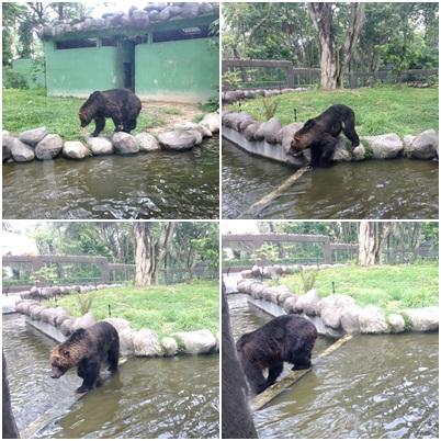 beruang zoo negara