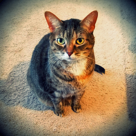 image of Sophie the Torbie Cat sitting on the living room floor, looking up at me