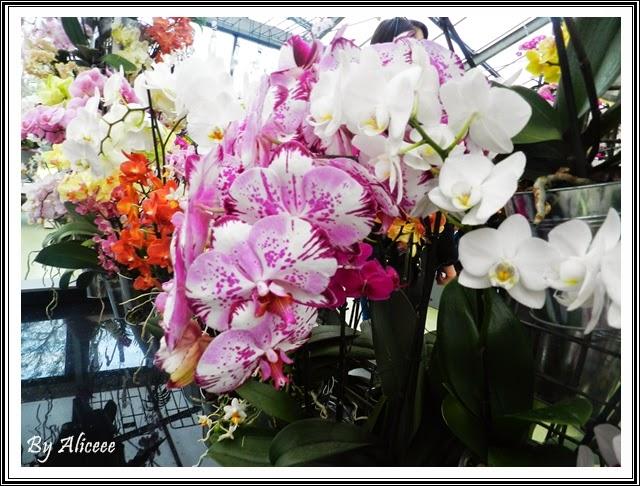 multe-orhidee