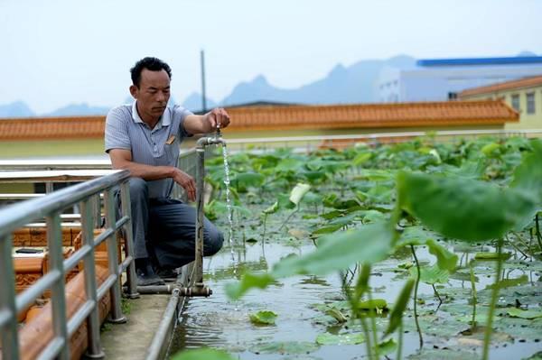 حقول الأرز على أسطح الأبنية