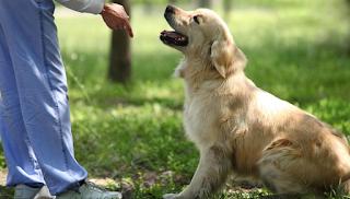 Κι όμως: Οι σκύλοι λένε ψέματα για να πάρουν αυτό που θέλουν [εικόνες]