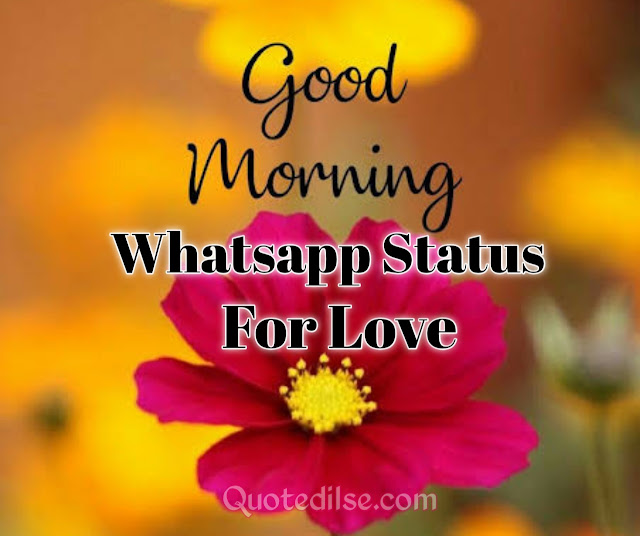 Good Morning Whatsapp Status For Love