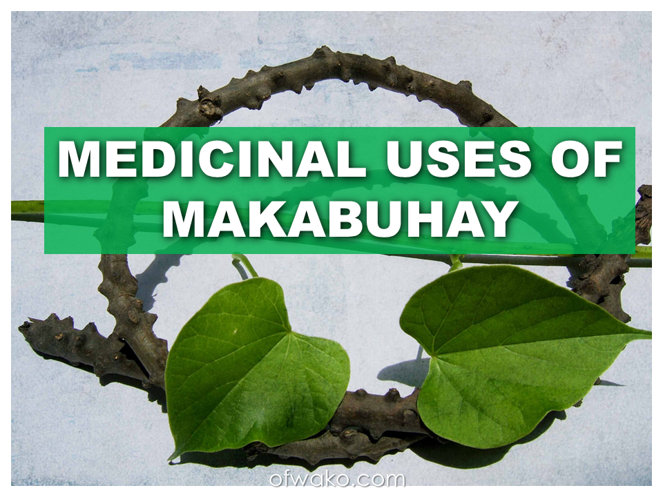 makabuhay plant extract Plant constituents are extracted into an herbal preparation because they are soluble if you were to prepare an alcoholic extract.