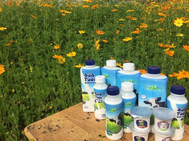 CTY Cung Cấp Sữa Bò Tươi Củ Chi Nguyên Chất - Sữa tươi giao tận nhà TPHCM