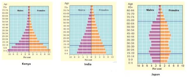 Population Pryamid