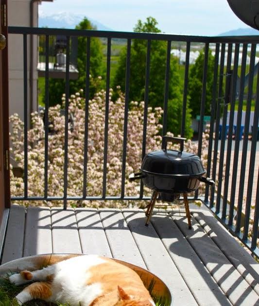 From Gardners 2 Bergers: Condo Cat's Backyard