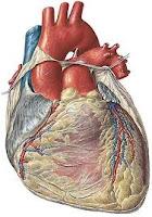 cual es mi frecuencia cardiaca máxima?