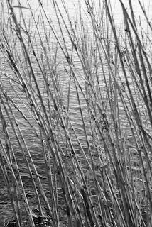 Plage des Graniers, Saint-Tropez l'hiver