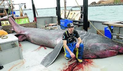 10 Ikan Raksasa yang Pernah Tertangkap Manusia