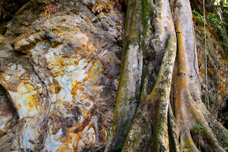 colorful rock wall and large tree