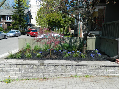Roncesvalles Village Toronto new garden installation after Paul Jung Gardening Services