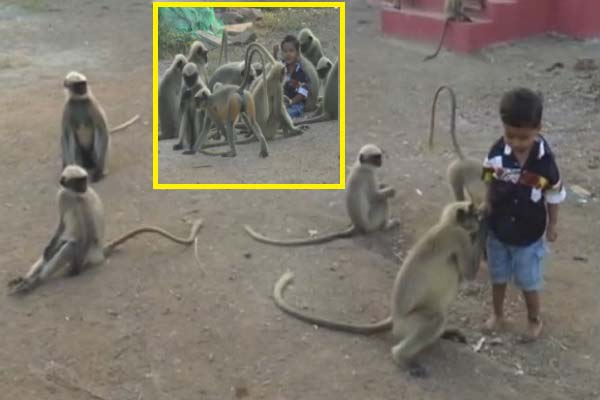 monkeys-become-best-friend-with-kids-in-hubali-karnataka-news