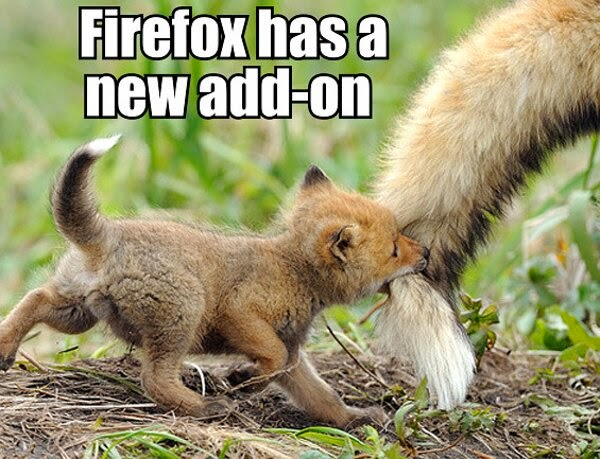 30 Funny animal captions - part 21 (30 pics), captioned animal pictures, baby fox