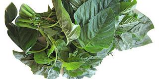 Manfaat Bayam bagi kesehatan, Sayur Penurun Kolestrol, Cara Mudah Menurunkan Kolestrol