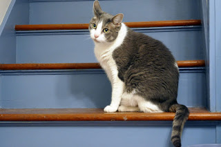 Crackle Pop, the cat, on the stairs