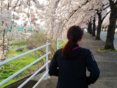 消防署前~山形蔵王ICまで延々と続く桜のアーチ