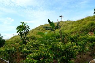 Kebun cabai Bukit Pulisan, Likupang Timur, Minahasa Utara, Sulawesi Utara +jelajahsuwanto