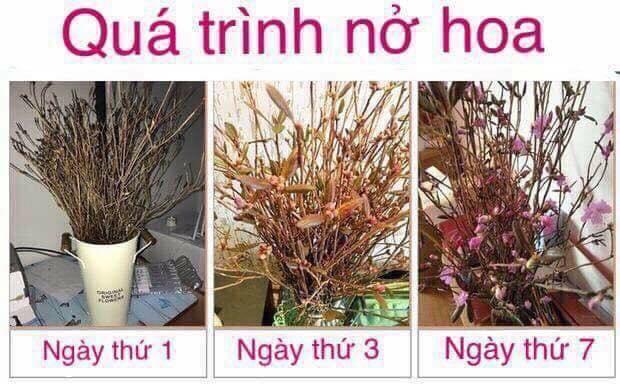 Hoa do quyen tai Dong Da