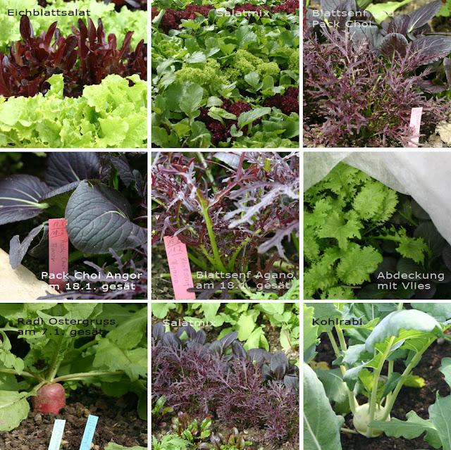 Aus dem Gemüsegarten von Weihenstphan - frühe Gemüse