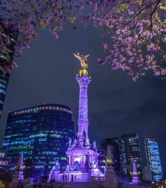 Jacarandas el color de la primavera mexicana