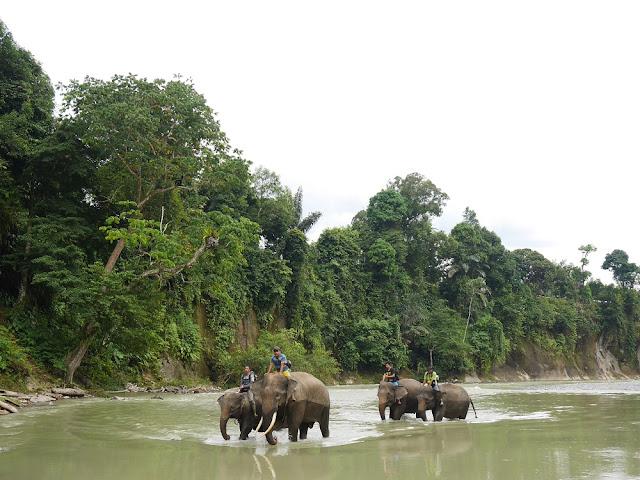 Gajah di Tangkahan