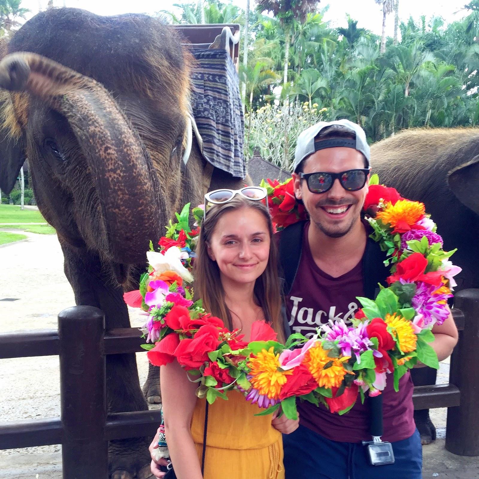 Elephant Park, Taro