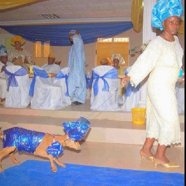 oni Photo Of The Day: Anything Is Allowed As A Wedding Gift In 'Ibadan
