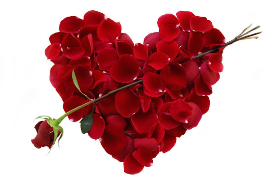 Valentinovo download besplatne pozadine za desktop 1920x1200 slike ecard čestitke ruža