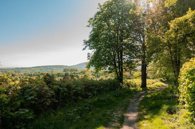 Gestütswiesen und Kästeklippen  Wandern Bad Harzburg 04