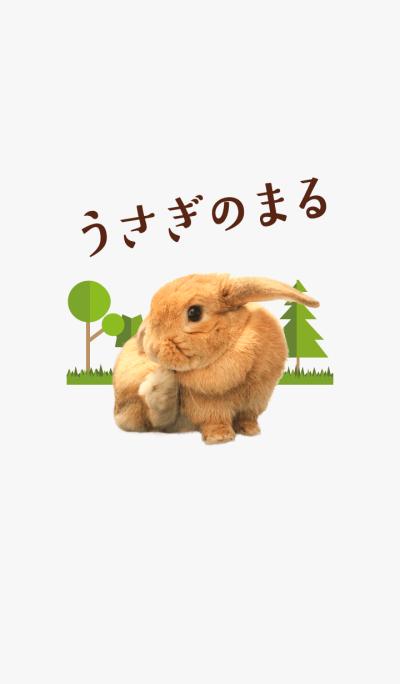 Rabbit of maru