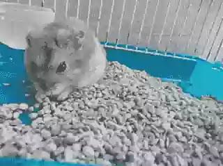 Zeolit untuk hamster
