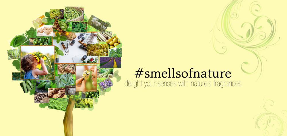 #smellsofnature Essential Oils in the Philippines by Casa de Lorenzo