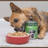 Dave's Pet Food Stewlicious Canned Dog Food Review