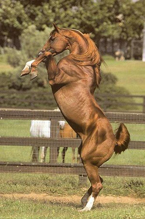 Golden horse or Akhal Teke